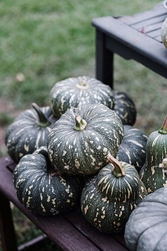 "[Pumpkins](https://www.homestolove.com.au/plant-guide-pumpkins-13036 target=""_blank"") harvested on the property."