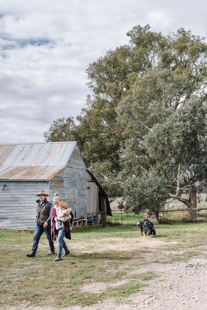 The old shearing shed is currently being converted into a creative studio for artists in residence. There are many other old dwellings on the property, including a workshop/shed, stables, dairy and hay shed.