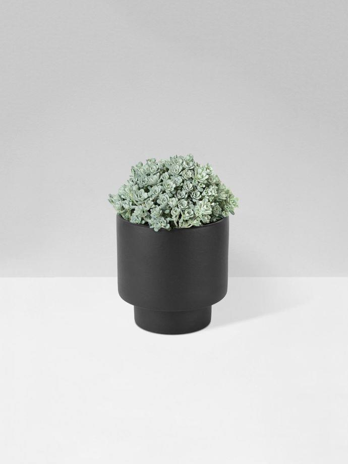 """**Black Podium Planter by Zakkia in Medium, $37, [Aura Home](https://www.aurahome.com.au/zakkia-podium-pot-medium-black