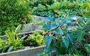 5 tips for growing a vegetable garden you'll actually use