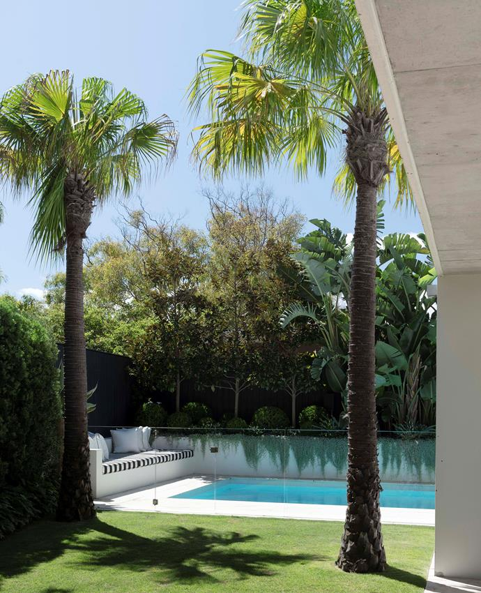 """Privacy screening has been achieved in this [lush Sydney garden](https://www.homestolove.com.au/lush-palm-springs-style-garden-sydney-22128