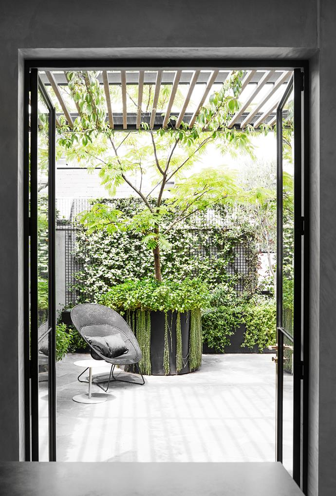 The courtyard garden by Myles Broad of Eckersley Garden Architecture includes dense plantings to create a 'veil' for the home's interior. Outdoor armchair from Curious Grace and side table from Cosh Living. Endicott crazy pavers from Eco Outdoor. Custom planter designed by landscaper Myles Broad of Eckersley Garden Architecture.