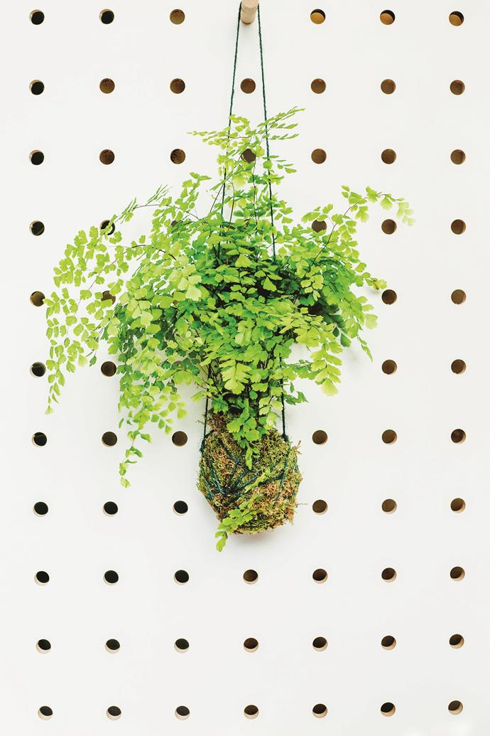 """**Hanging plants:** Transform your home into a lush oasis and save precious floor space with [hanging plants](https://www.homestolove.com.au/the-best-indoor-hanging-plants-for-australian-homes-5001