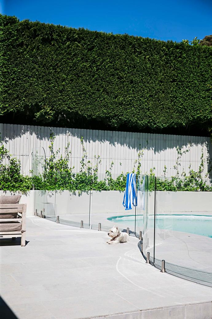 Oversized hedges stand guard around the resort-style pool in the home.
