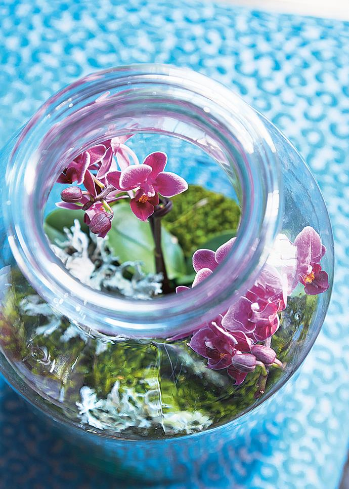 **Orchids **also known as *Orchidaceae*, are available all year round.