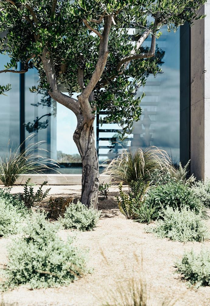 The impressive wall of windows in the ground floor living area were designed to provide an immersive experience of the surrounding beach and tea tree scrub while strengthening the indoor/outdoor connection.