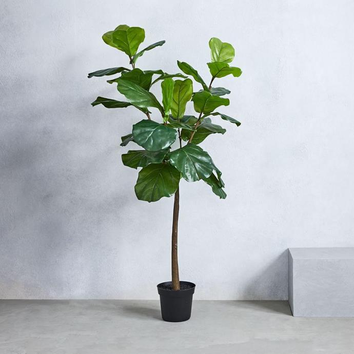 """Meghan clearly loves a touch of greenery in her space, so she's made room for an extra large fiddle-leaf fig in corner of her home office - just in screen for a Zoom. If you don't want the hassle of [caring for a real fiddle-leaf fig](https://www.homestolove.com.au/tips-for-caring-for-fiddle-leaf-fig-trees-4923 target=""""_blank""""), this [faux option](https://www.homestolove.com.au/we-ordered-five-faux-fiddle-leaf-fig-trees-online-and-this-one-is-the-best-22637 target=""""_blank"""") looks as good as the real thing.   **Faux Fiddle Leaf Fig Plant, $299, [West Elm](https://www.westelm.com.au/faux-fiddle-leaf-fig-plant-d5172 target=""""_blank"""").**"""
