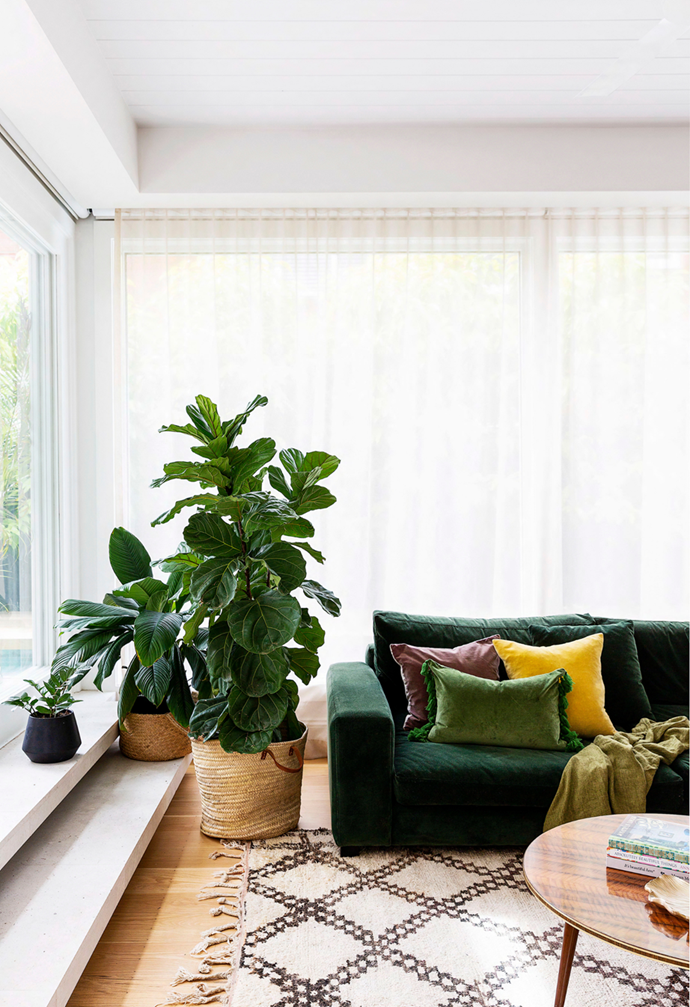 """Relaxed family style prevails in this [beachside Sydney home](https://www.homestolove.com.au/beachside-new-build-sydney-22226 target=""""_blank""""), courtesy of a custom velvet sofa from H&J Furniture, a rug bought by Lou in Morocco, oak flooring and a large fiddle leaf fig."""
