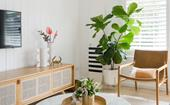How you're killing your fiddle leaf fig