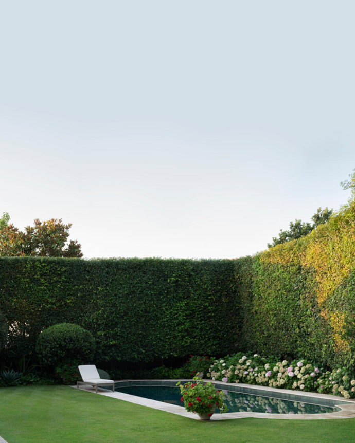 """A hedge of weeping lilly pilly (Waterhousea floribunda) is dense and healthy around the pool in this [lush botanical garden](https://www.homestolove.com.au/botanical-garden-filled-with-textural-plantings-21557