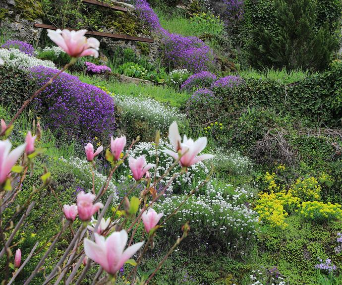 Pair magnolias with shade-loving flowering plants for a showy springtime display.