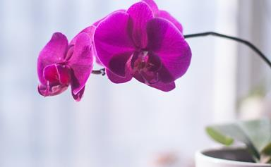 A step-by-step guide to repotting an orchid