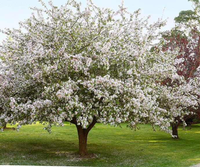 Blush pink blossoms and ornamental fruit make the crab apple tree a popular choice in this exquisite garden.