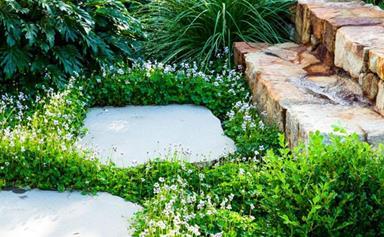 5 flowering groundcovers for Australian gardens