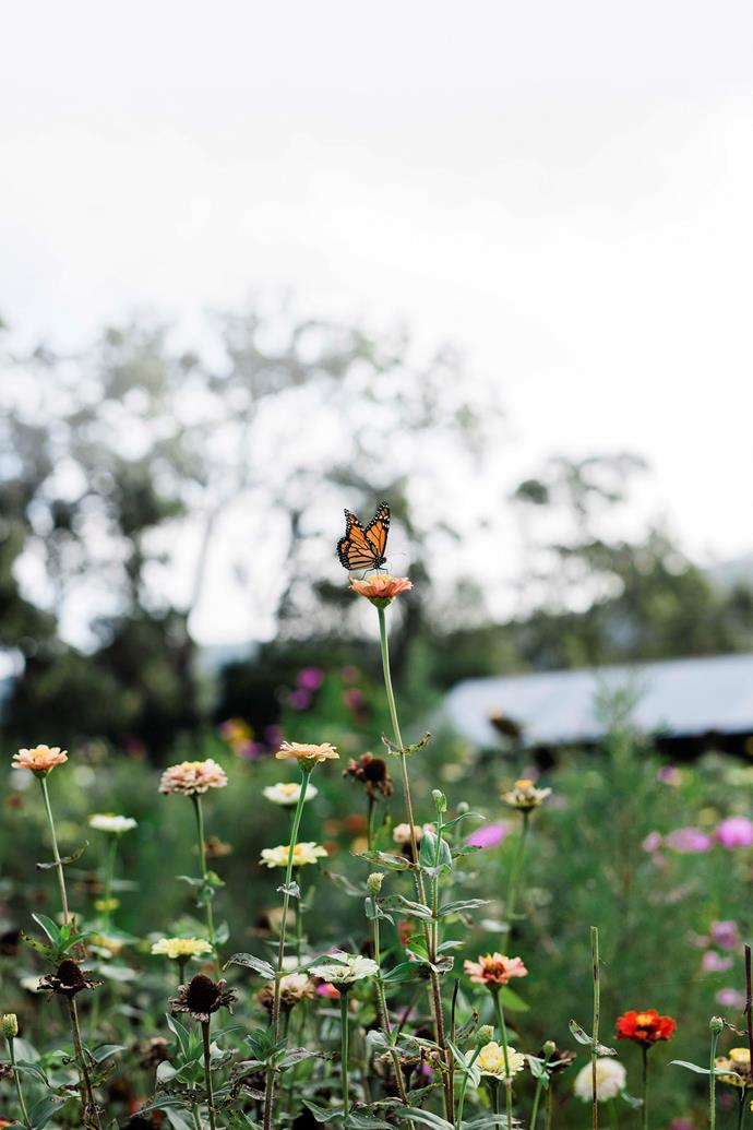 The garden is alive with beneficial insects including butterflies.