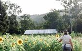An edible flower farm on the edge of a national park in Queensland