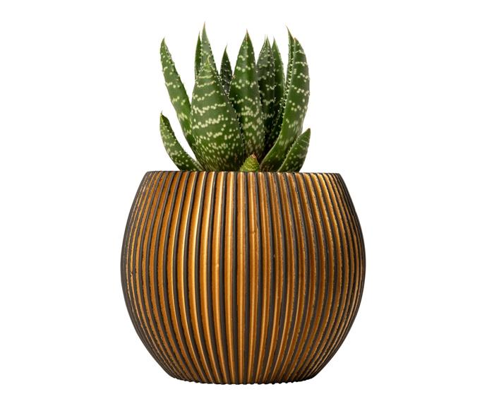 """Give a rustic home a touch of understated glam with a collection of **[Capi black and gold groove ball planters, $9.98](https://www.bunnings.com.au/capi-11-8-x-9-5cm-black-gold-groove-ball_p0266741 target=""""_blank"""" rel=""""nofollow"""")**. This collection is inspired by the vertical grooves in rocks and mountains, and is both durable and lightweight."""