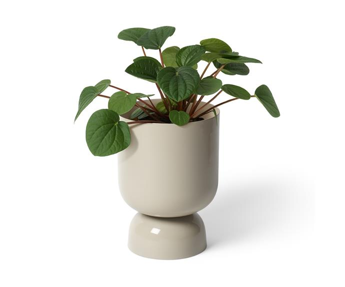 """Melbourne design house Lightly are known for their unique, highly Instagrammable planters. Their **[Goblet Metal pot, $59](https://www.bunnings.com.au/lightly-150-x-215mm-dune-goblet-metal-pot_p0262350 target=""""_blank"""" rel=""""nofollow"""")** is no exception, and is now widely available at Bunnings. We especially love the shade 'Dune' which is perfect for homes channeling the warm neutrals trend. Also available in the shades clay and river."""