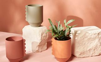 3 plant pots against a terracotta background with stone props