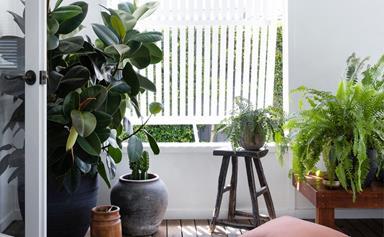 10 indoor plants that will be trending in 2022