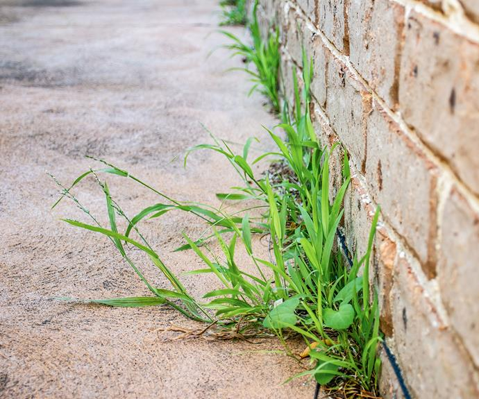 Winter grass loves to grow in cracks in concrete, resulting in a yard that looks untidy.