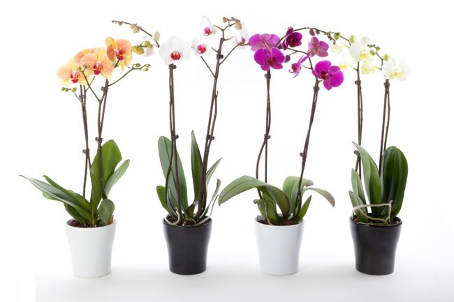**5\. Care for orchids**  Elegant orchids are an ideal indoor plant as they require very little maintenace, preferring a light mist of water every week or so over daily attention. Check out [how to grow and care for orchids](http://www.homelife.com.au/gardening/how+to+grow/how+to+grow+orchids,14863).