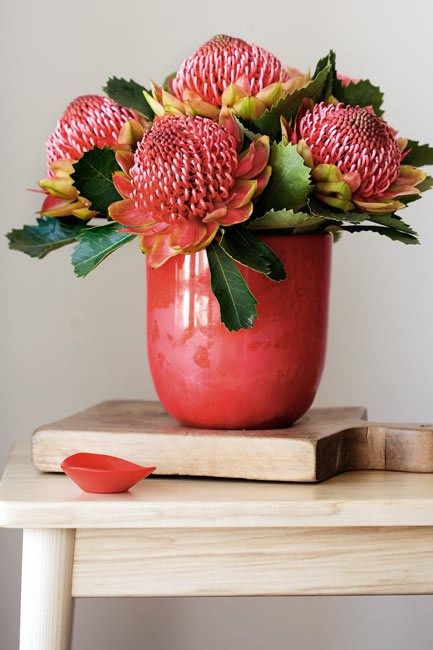 **Waratahs** look best when displayed in a tight cluster at the lip of an opaque vase. This conceals their woody stems and creates balance. | Photo: Scott Hawkins
