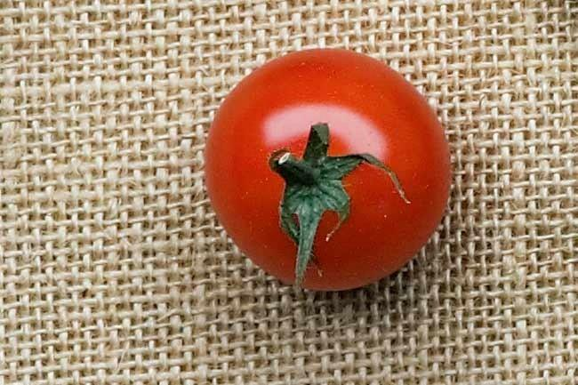 **Tommy toes** | About the size of an apricot, tommy toes are an heirloom tomato variety renowned for their full and sweet flavour.