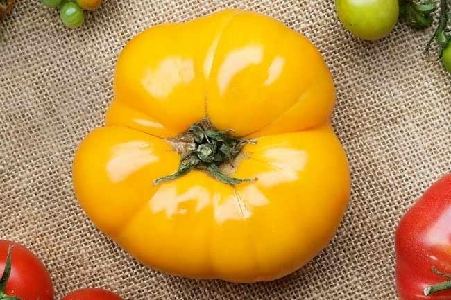 **Golden jubilee** | Lower in acidity than other tomato varieties, the first Golden Jubilee tomato seeds were first released for sale in the US in 1943.