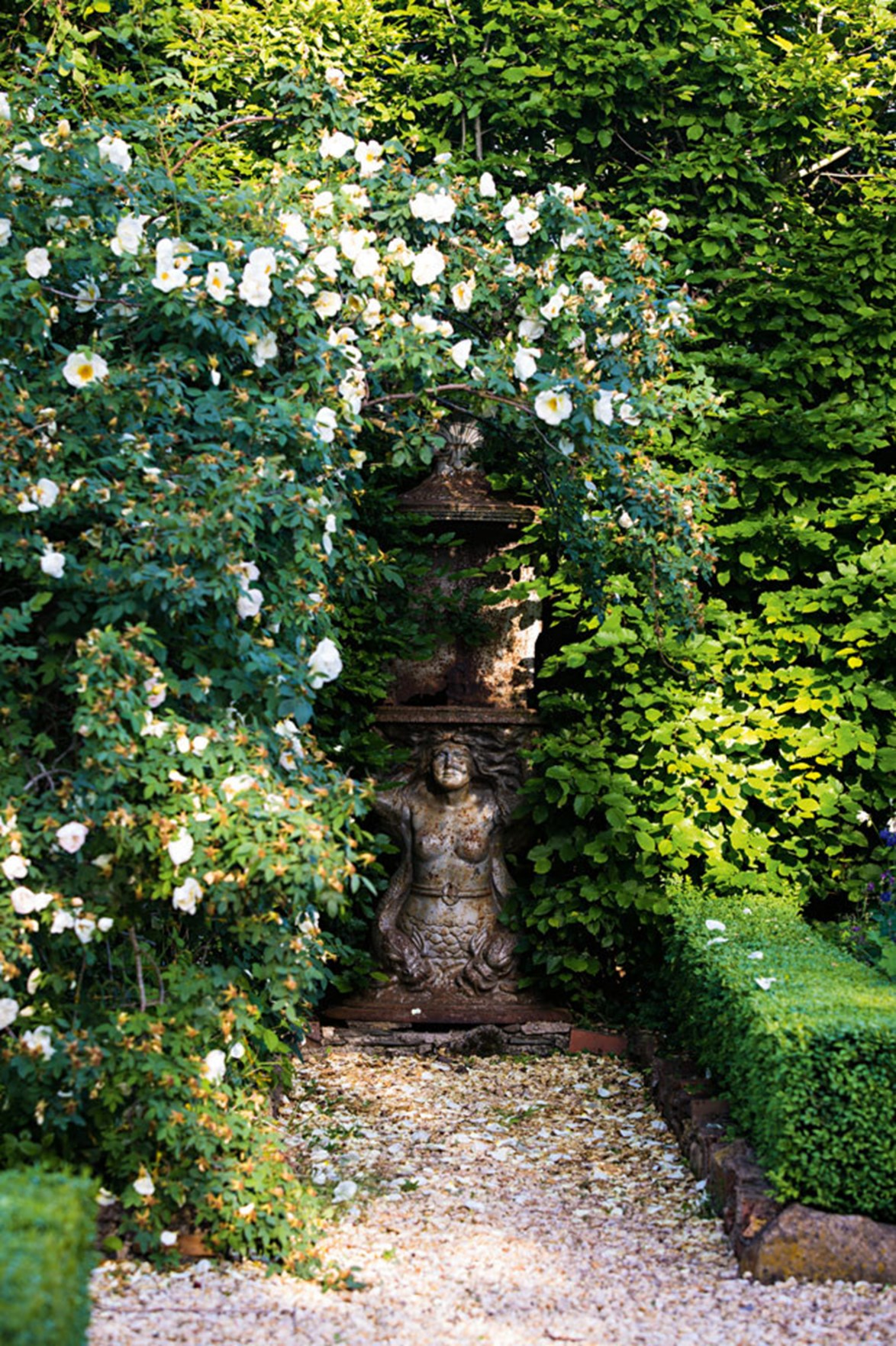 "A 'fruhlingsgold' rose sprawls over an antique statue at a manicured [country garden in Newlyn, Victoria](https://www.homestolove.com.au/a-flourishing-country-garden-in-newlyn-victoria-13541|target=""_blank""). The impressive garden of ornamental grasses, rambling roses and perennials is bordered by an immaculately clipped border of box hedge. *Photo: Claire Takacs*"