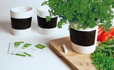 6 indoor garden buys for the urban gardener