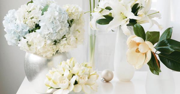 How to grow white christmas flowers homelife mightylinksfo