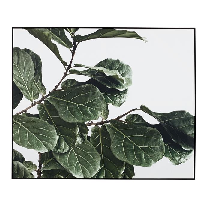 Fiddle Leaf Framed Canvas, $269