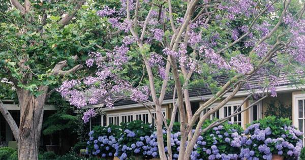 Shade loving flowers homelife mightylinksfo
