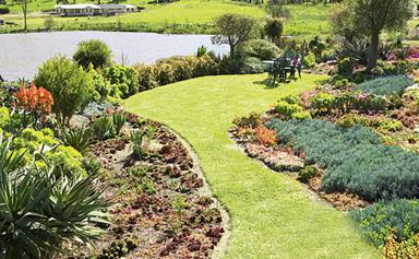 Succulent water-wise garden.