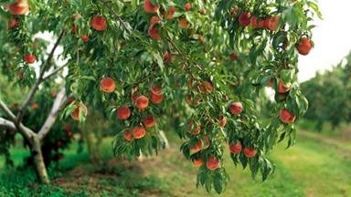 How to care for fruit trees in winter