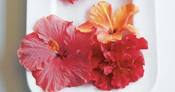 Edible Hibiscus Flowers Homelife