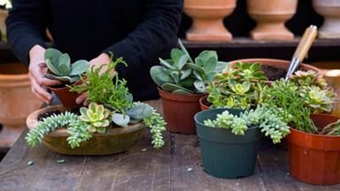 Potted garden ideas