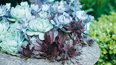 Plant guide: Succulents