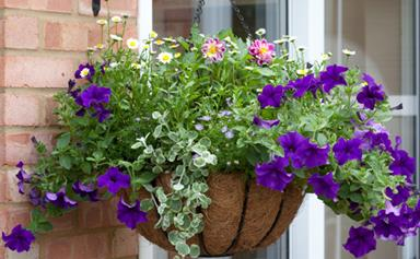 How to use hanging baskets