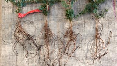Propogate new plants