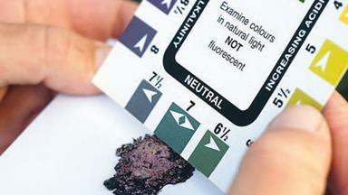 Check soil pH levels
