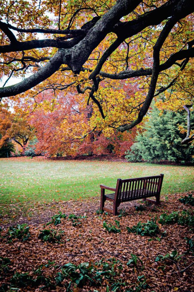 An inviting bench from which to enjoy the view across the croquet lawn at [Culzean](http://www.culzeangardens.com/) gardens. Click here for [autumn gardening tips](http://www.homelife.com.au/gardening/galleries/autumn+gardening+tips,10220).