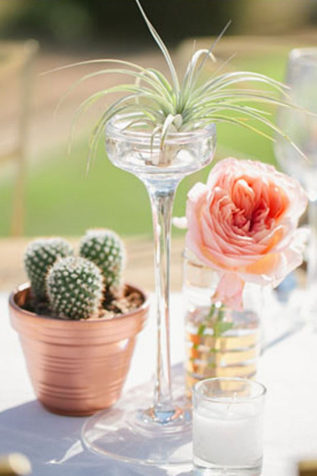 Pastel roses and air plants add softness to a cactus display. _Image via[Green Wedding Shoes](http://greenweddingshoes.com/spanish-bridal-fashion-mexican-pastels/)_