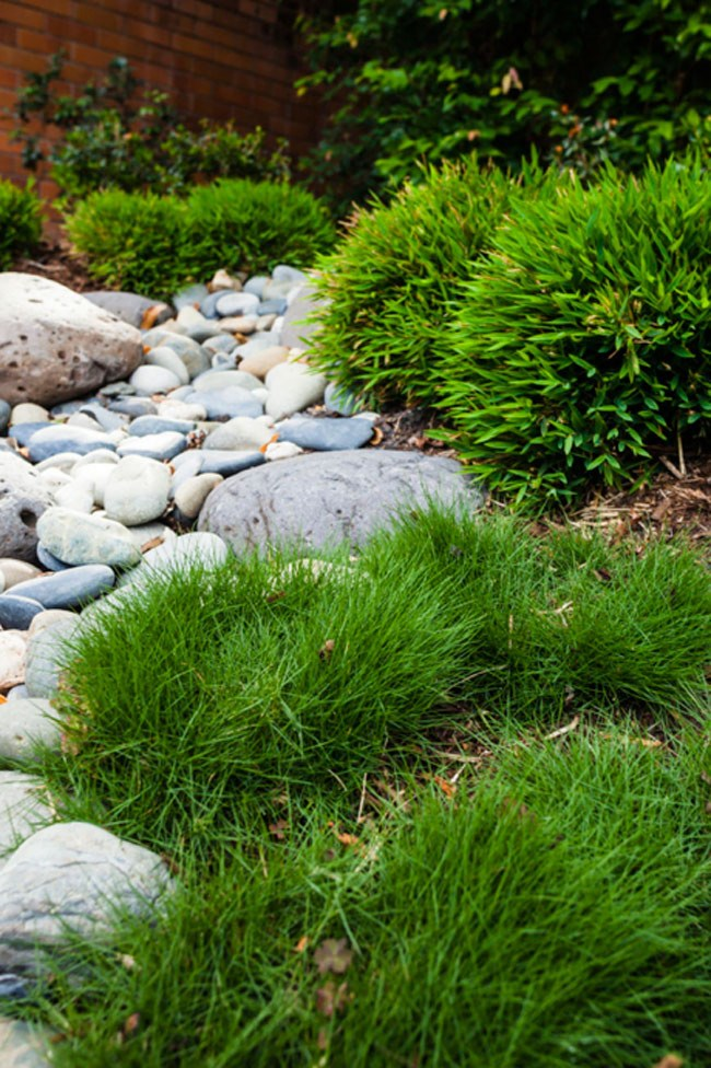**8\. Japanese inspired dry creek bed.** Tumbled pebbles are surrounded by baby bamboo plants and Korean grass.