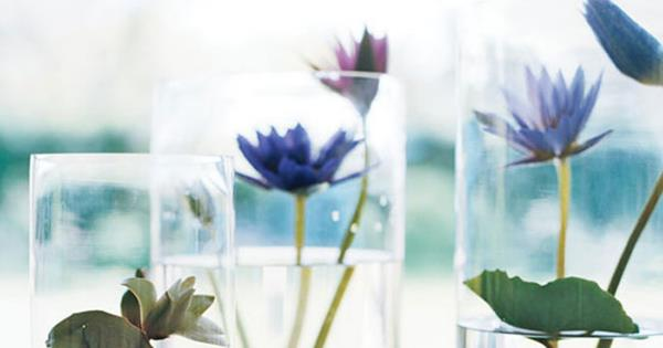 How To Make A Lily Pond In A Vase Homelife