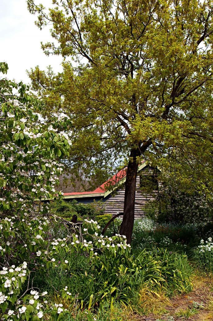 The house is surrounded by trees, including a quince.