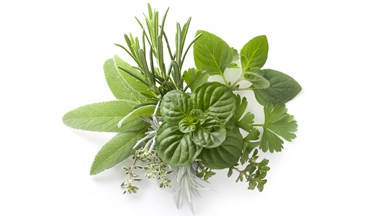 Guide to spring herbs