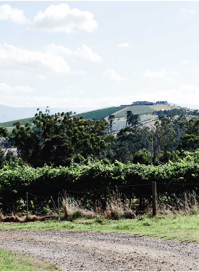 In what may be the most perfect, Kennedy & Wilson also produces a small wine label. Here, the vines surround the chocolate factory.   Photo: Lisa Cohen