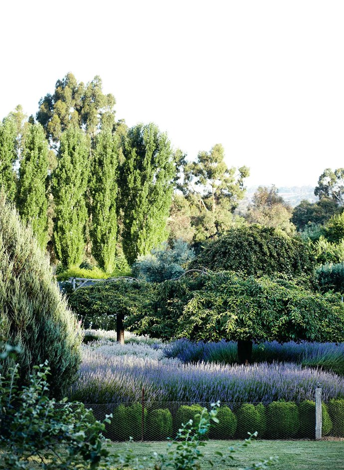 "<p>**SLEEP AMONG FIELDS OF LAVENDER**<p> <P>[Book your accommodation](https://www.lavandula.com.au/accommodation|target=""_blank"") and sleep among the lavender at Lavandula Swiss Italian Farm."